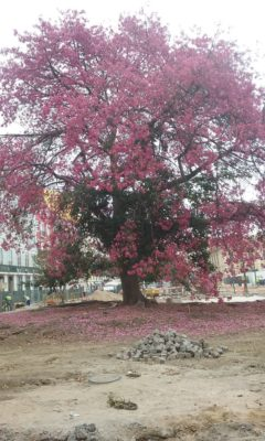 We Admired This Tree Every Day