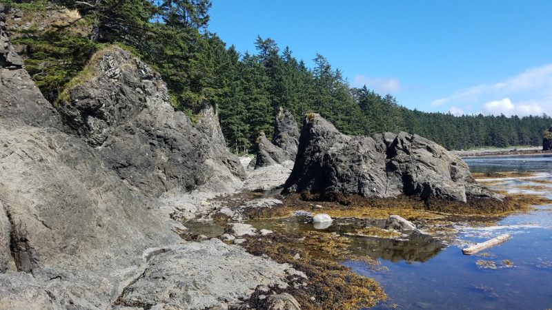 Coastal-Olympic-Peninsula-Queets