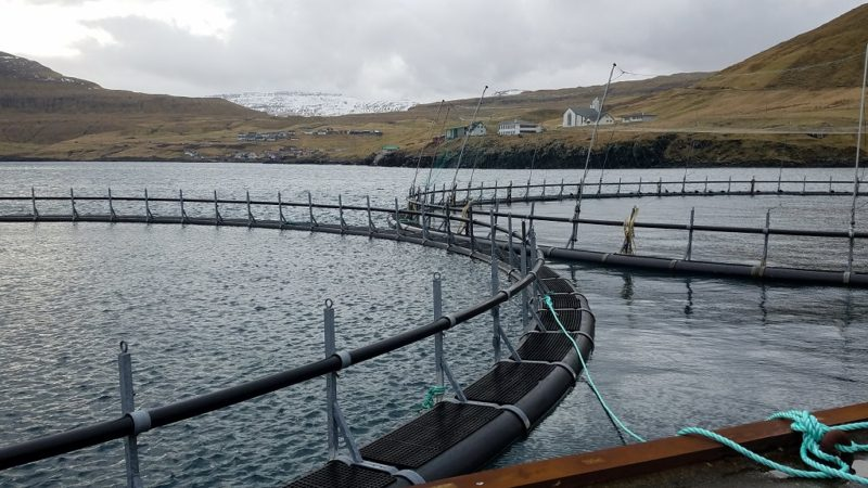 Faroe Islands, aquaculture