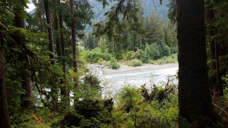 Coastal-Olympic-Peninsula-Hoh-River-Trail