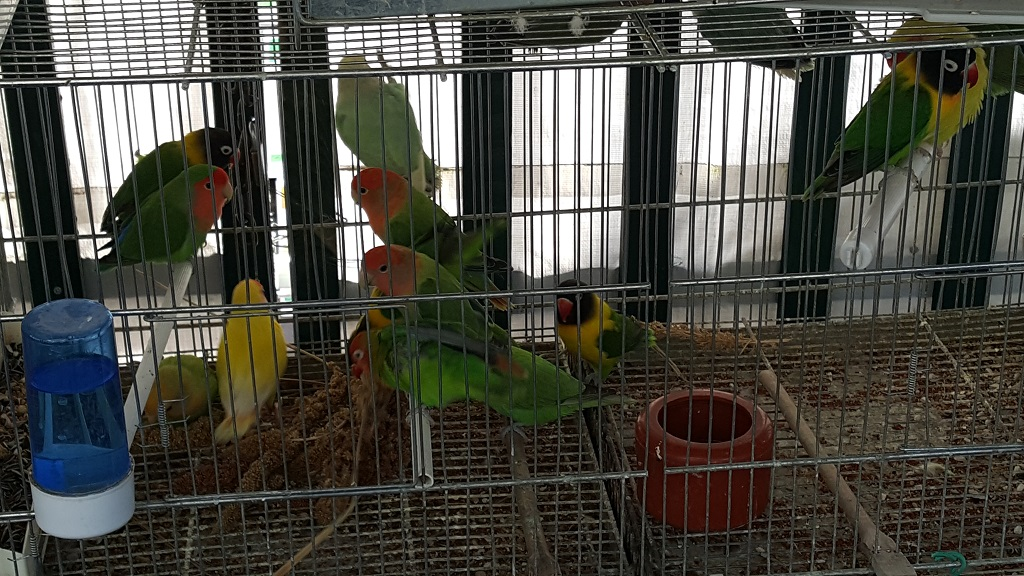 Electric Green Parrots