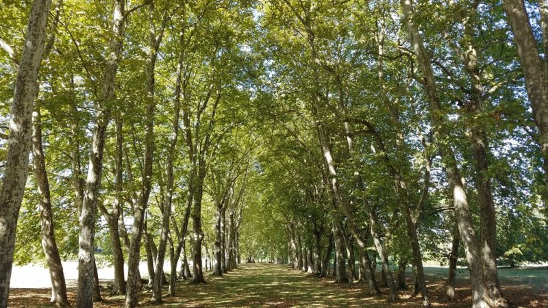 Bordeaux-Sycamore-Grove