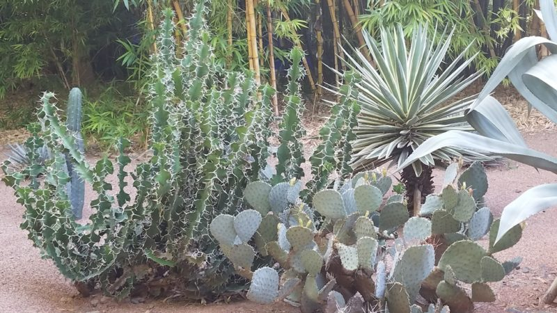 Marrakesh-Morocco-Ville_Nouvelle-Jardin-Marjorelle-Cactus-Garden