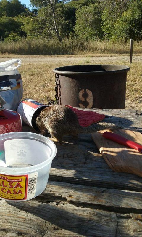 The Squirrels Score Big With Fatty Coconut Milk