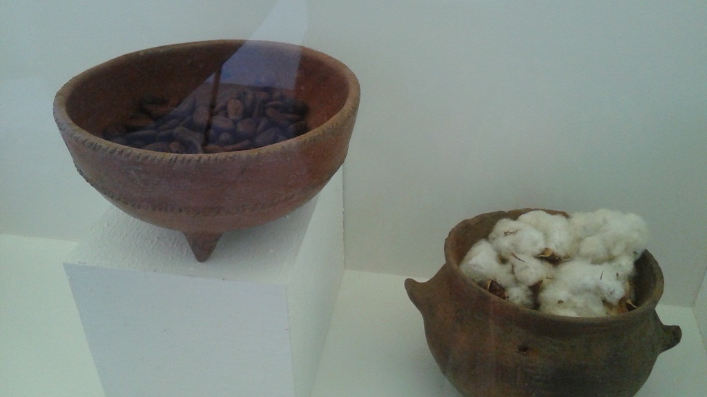 Cacao and Cotton Are Useful Plants Grown in the Region, Featured at the Archeological Museum