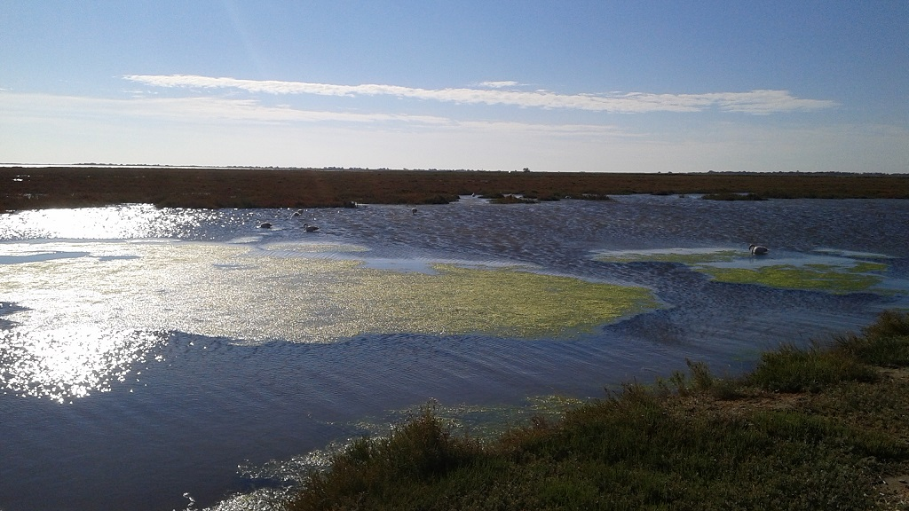 Flamingos Dot the Marshy Landscape