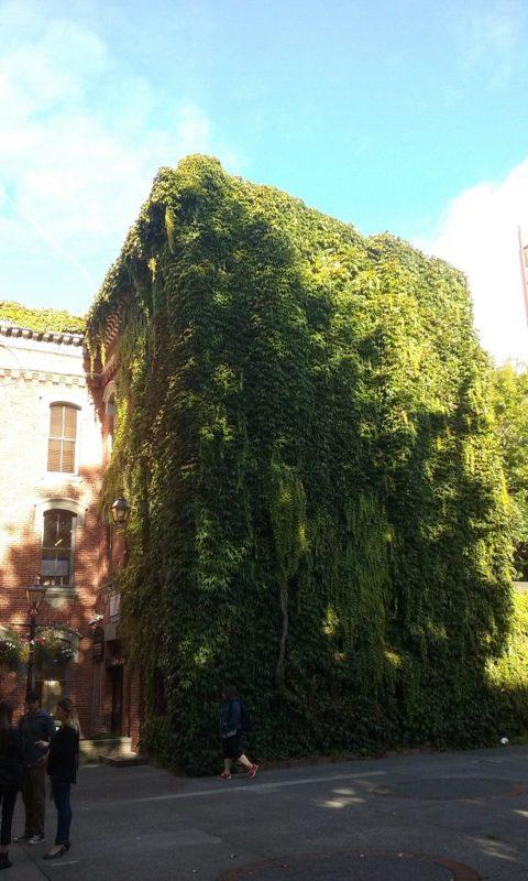 Secret Garden Spots Were in the Alleys
