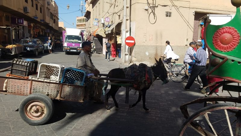 Souss-Valley-Taroudant-Donkey-Cart