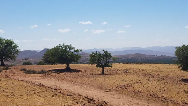 Souss-Valley-Argan-Trees-Nuts-Oil